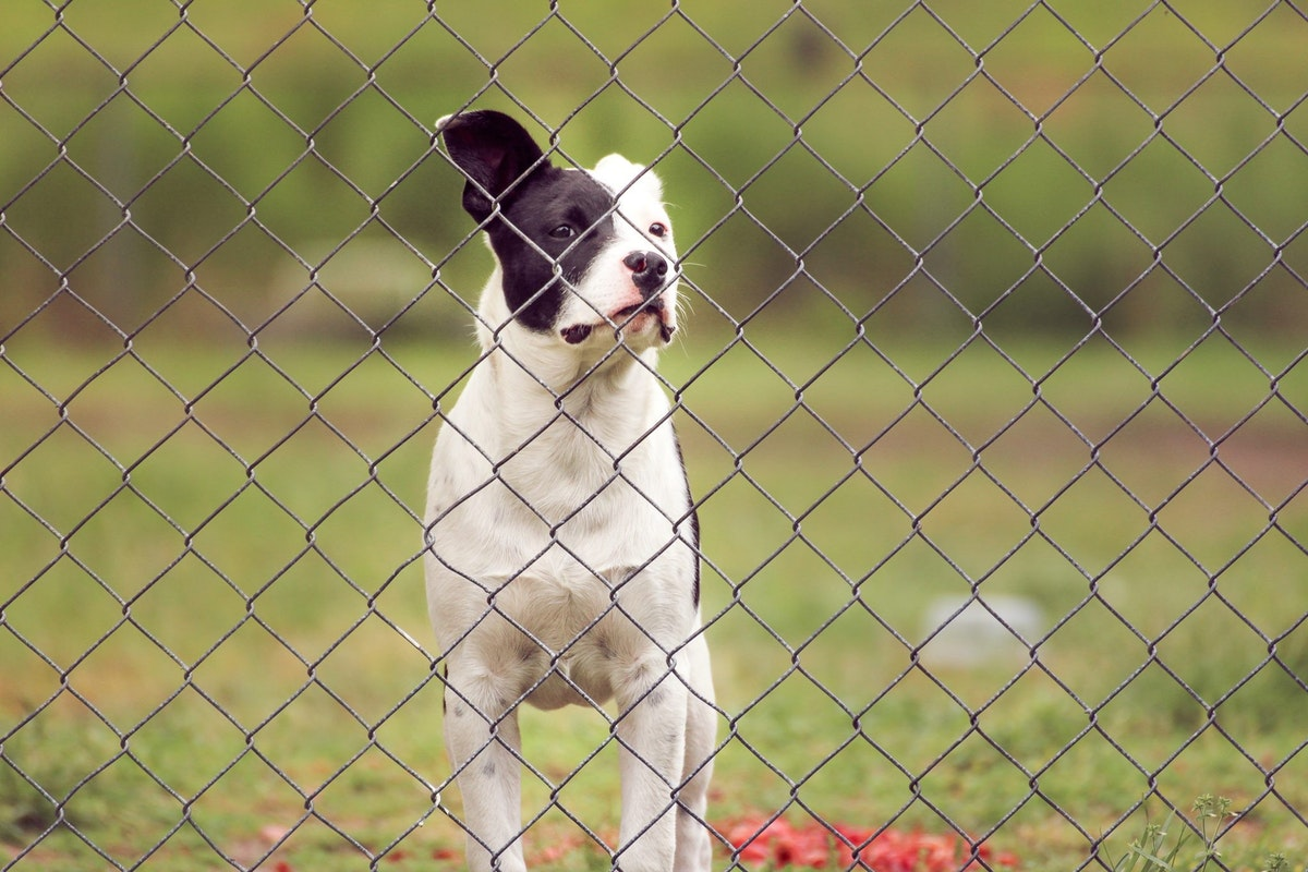 What Type of Dog Fence Do You Need?