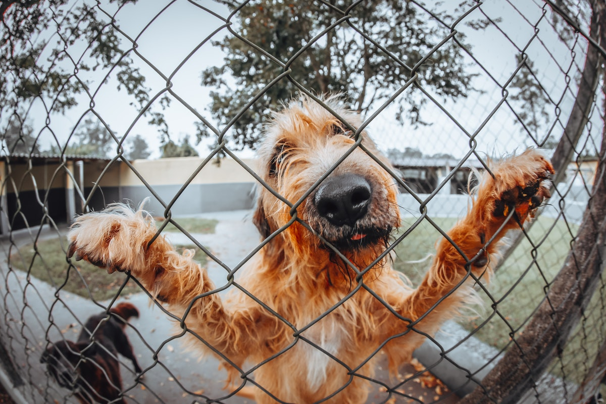 Three Reasons to Trust the Fence Professionals with Your Dog Fence Installation