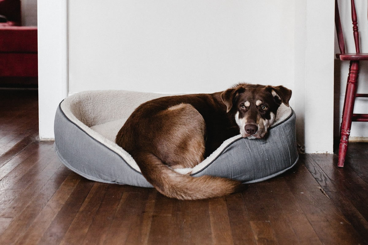 How to Prepare Your Home for a Dog