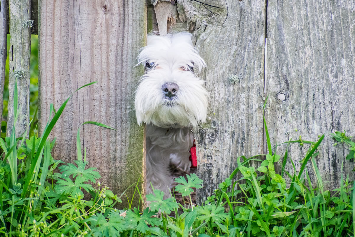 What to Consider When Getting a Fence for Your Dog